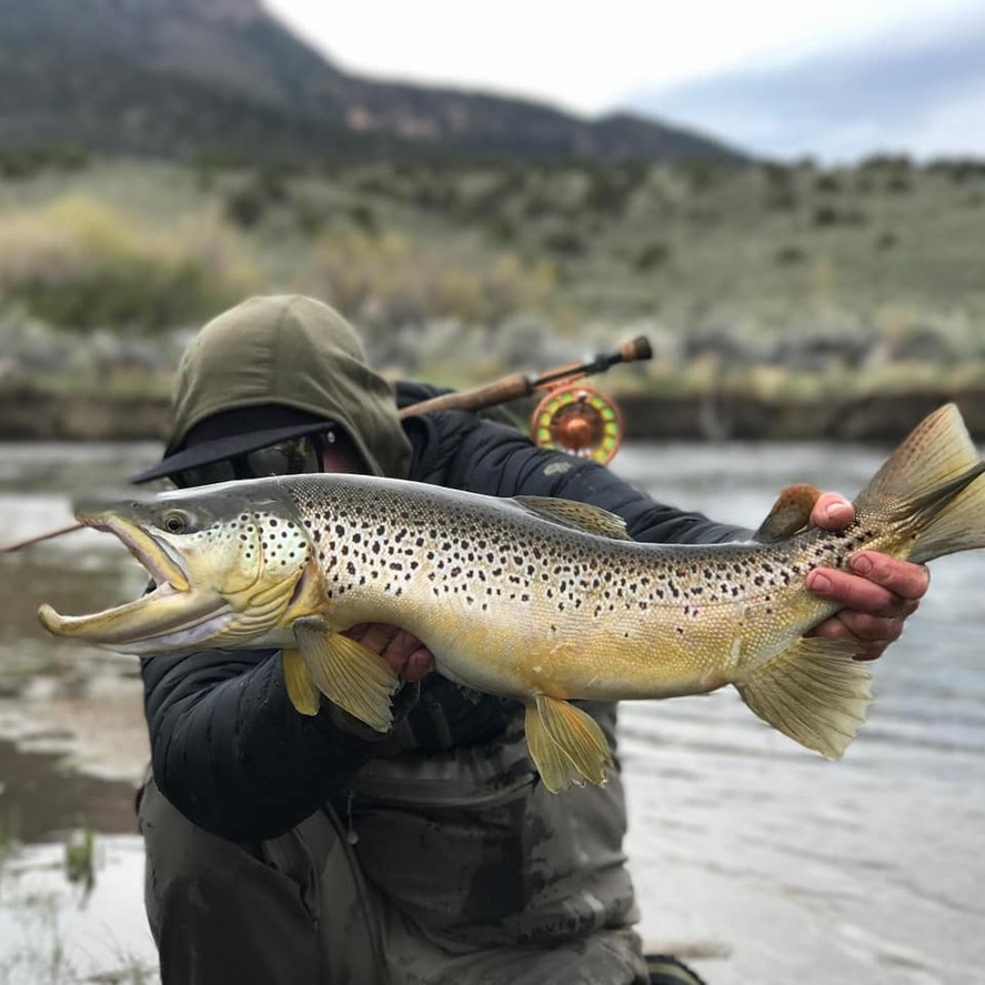 East Walker River | Ken's Sporting Goods